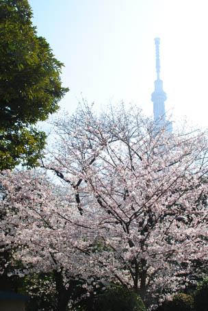 江戸の花見に外国人